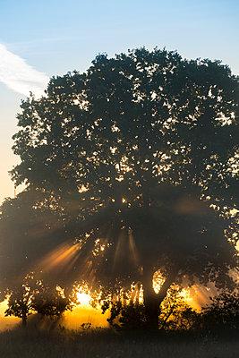 Sonnenstrahlen brechen durchs Blätterwerk - p739m1170258 von Baertels
