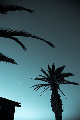 Palm Trees - p975m1110542 by Hayden Verry