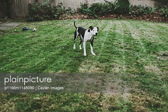 p1166m1145090 von Cavan Images