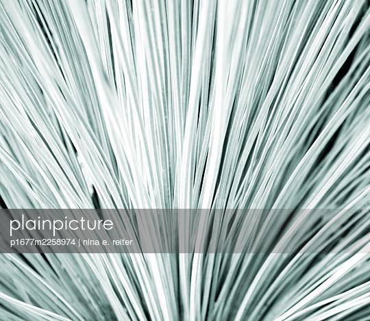 Blades of grass, close-up - p1677m2258974 by nina e. reiter