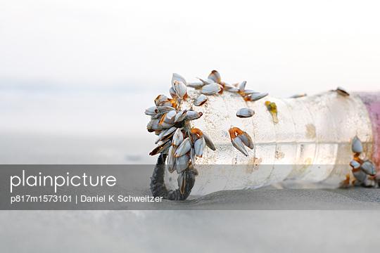 Plastikflasche am Strand - p817m1573101 von Daniel K Schweitzer