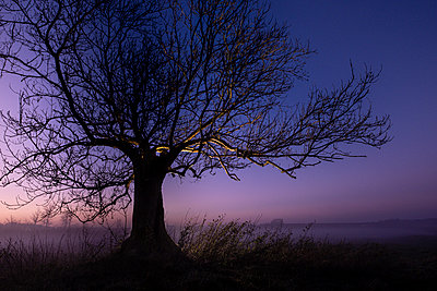 Leafless tree at sunset - p1057m2142802 by Stephen Shepherd
