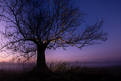 Blattloser Baum im Sonnenuntergang - p1057m2142802 von Stephen Shepherd