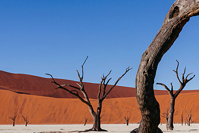 Deadvlei - p1065m885979 by KNSY Bande