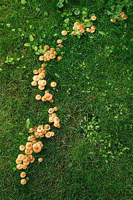 Pilze sprießen - p2370600 von Thordis Rüggeberg