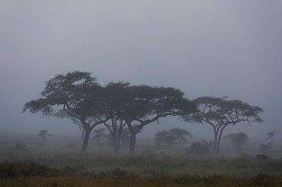 A rainstorm hits the plains of Serengeti, Seronera, Serengeti National Park, Tanzania - p429m2019106 by Delta Images