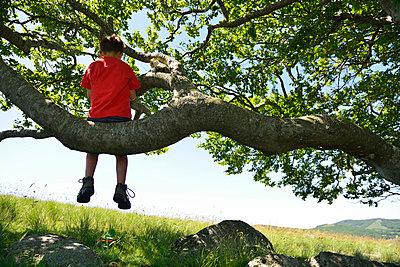 Im Baum sitzen - p829m716109 von Régis Domergue