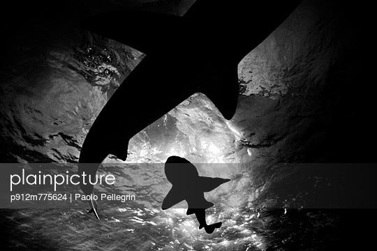 p912m775624 von Paolo Pellegrin
