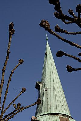 tree-cut 2 - p067m1131817 by Thomas Grimm