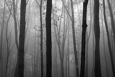 Deciduous forest - p1199m2152909 by Claudia Jestremski