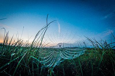 Spinnennetz - p829m982562 von Régis Domergue