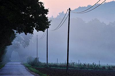 Landstrasse im Morgennebel - p9791696 von Schickhofer