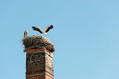 Stork nest - p1079m995530 by Ulrich Mertens