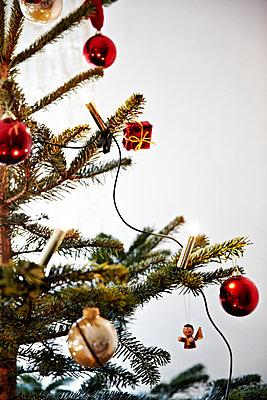 Fir twig - p1146m1109444 by Stephanie Uhlenbrock