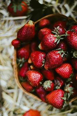 Fresh picked strawberries. - p1166m2088631 by Cavan Images