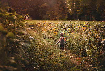 Far away back view of child running in a sunflower field in summer - p1166m2212705 by Cavan Images