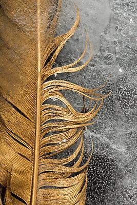 Golden feather - p451m908128 by Anja Weber-Decker