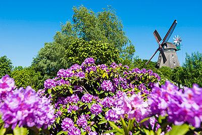 Windmühle und Rhododendron - p488m1048442 von Bias