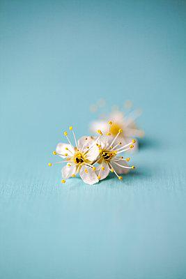 Small White Blossoms  - p1248m1562046 by miguel sobreira