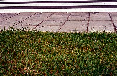Zebrastreifen und Rasen - p1850004 von Maja Brenner