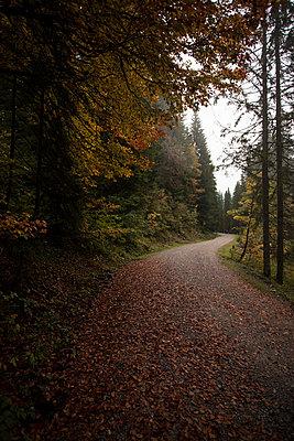 Herbst - p586m859092 von Kniel Synnatzschke