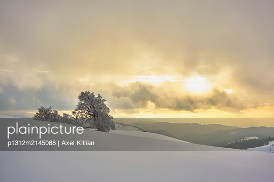 Trees in snowy landscape - p1312m2145088 by Axel Killian