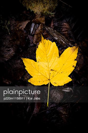 Herbstlaub - p220m1158911 von Kai Jabs