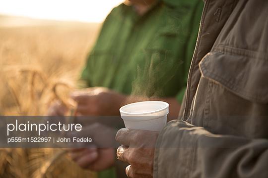 Caucasian men examining wheat - p555m1522997 by John Fedele