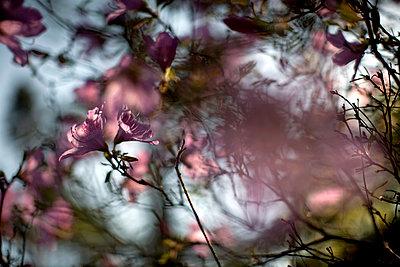 Spring blossom - p1307m1162015 by Agnès Deschamps
