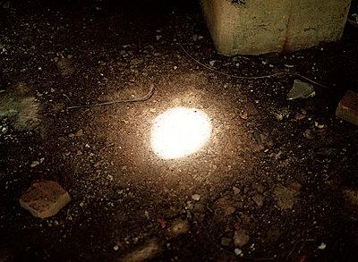Sunbeam - p1415m2076762 by Sophie Barbasch