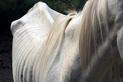 Verhungertes Pferd - p2651299 von Oote Boe