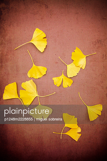 Scattered ginkgo leaves  - p1248m2228855 by miguel sobreira