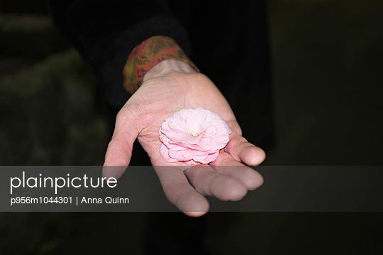 Hand holding flower - p956m1044301 by Anna Quinn