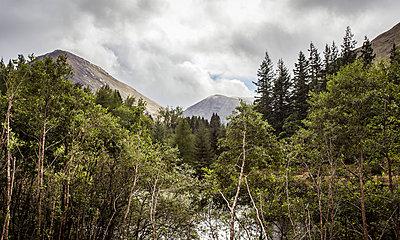 Mischwald vor Bergen - p1234m1044584 von mathias janke