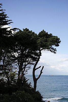 Pine Trees over the Sea - p1307m2222452 by Agnès Deschamps