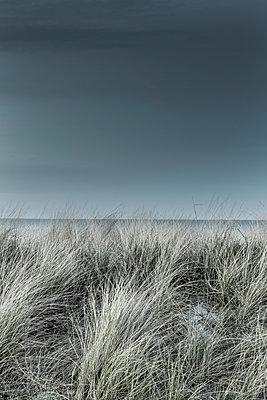 Hohes Dünengras - p248m1025418 von BY