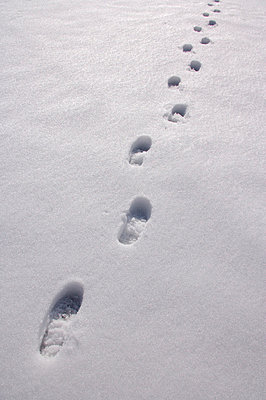Tracks in the snow - p2686499 by Adrian Bischoff