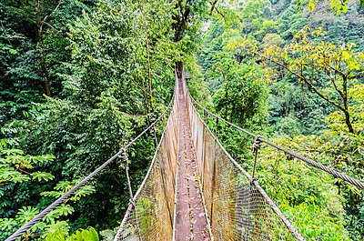 Costa Rica, Jungle, suspension bridge - p300m1019171f by Thomas Haupt