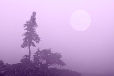 Misty silhouette of evergreen tree with moon - p6070088 by Grambo