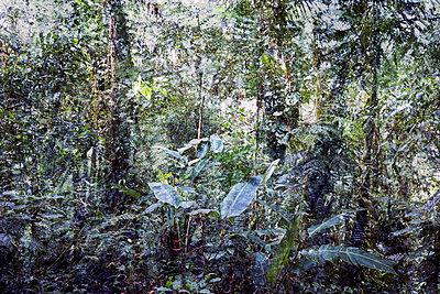 Dschungel Künstlerische Darstellung - p719m2044627 von Rudi Sebastian