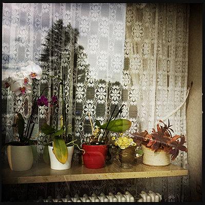 Fenster an einem Reihenhaus - p979m2093006 von Werner Gritzbach