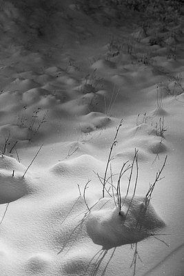Snow Shadows - p1262m1200650 by Maryanne Gobble