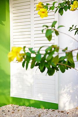Gelbe Blüten am grünen Haus - p606m885539 von Iris Friedrich