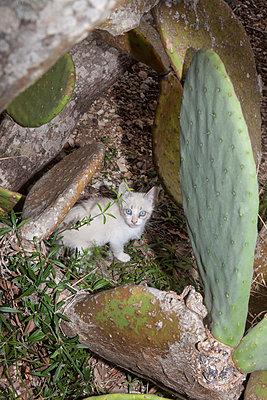 Kitten on a cactus - p1514m2086633 by geraldinehaas