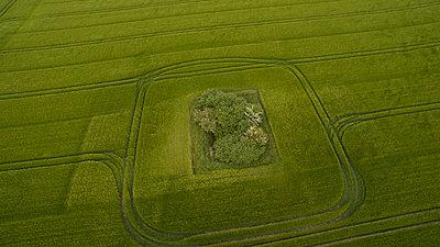 Bäume auf einem Feld Luftaufnahme - p179m1475492 von Roland Schneider