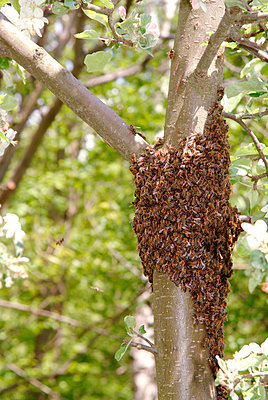 Beehive - p2350544d by KuS