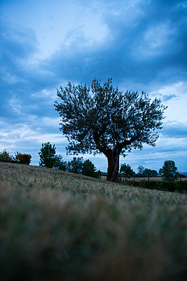 A Tree at Twilight - p081m741215 by Alexander Keller