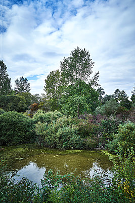 Riverside forest and a small lake - p1312m2210114 by Axel Killian
