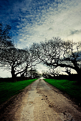 Oak-lined Path I - p248m788051 by BY