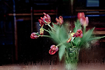 Blumenstrauss hinter Glasscheibe mit Kondenstropfen - p627m1035772 von Hendrik Schirmann